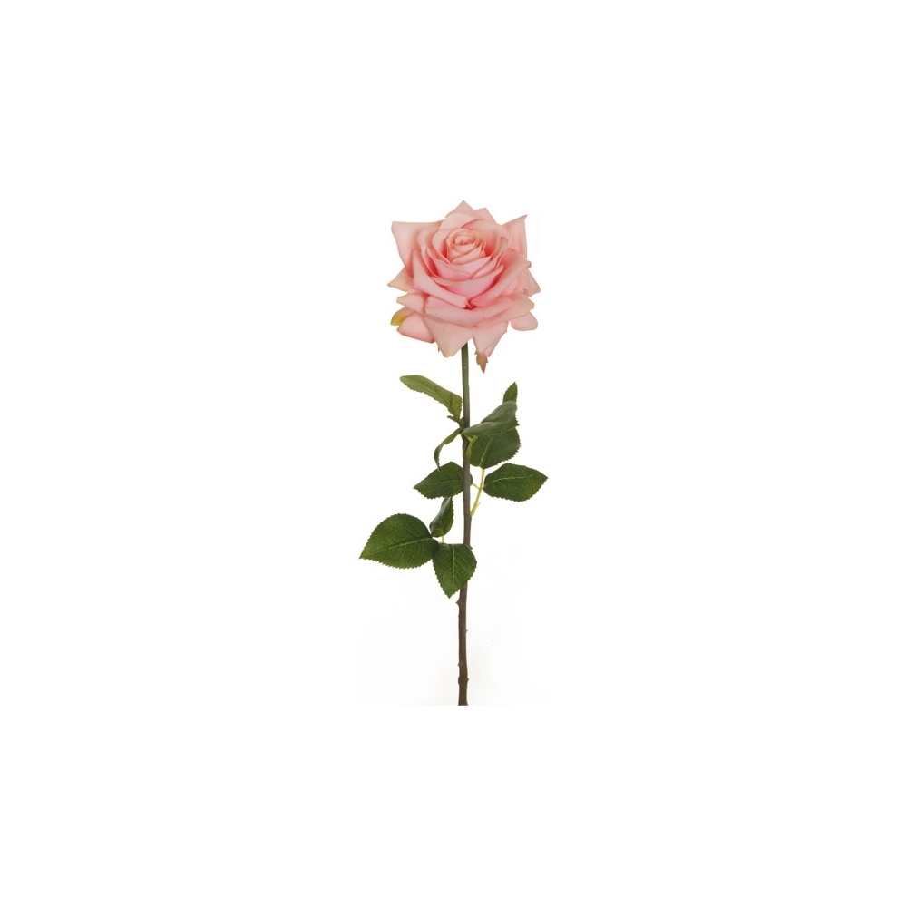 Rosa a stelo lungo