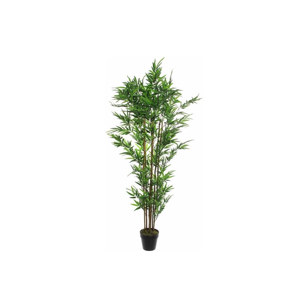 Pianta bamboo con vaso