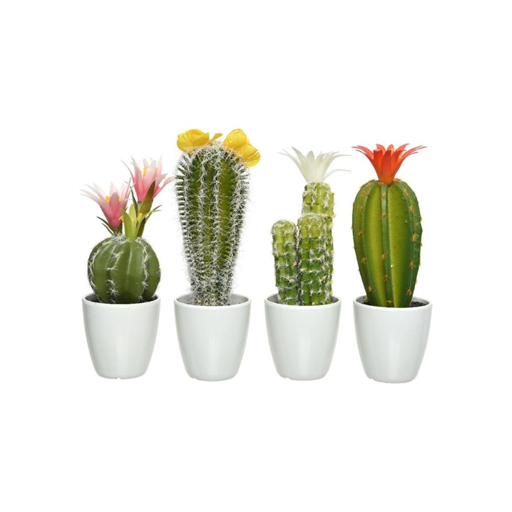 Piantine grasse con vaso - Incartare - Acquista online o presso il ... ee0218a0065