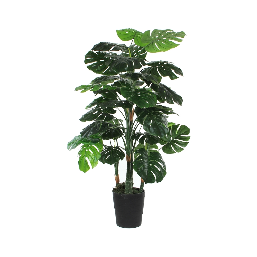 Pianta monstera con vaso