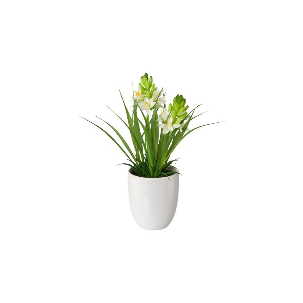 Giacinto con vaso