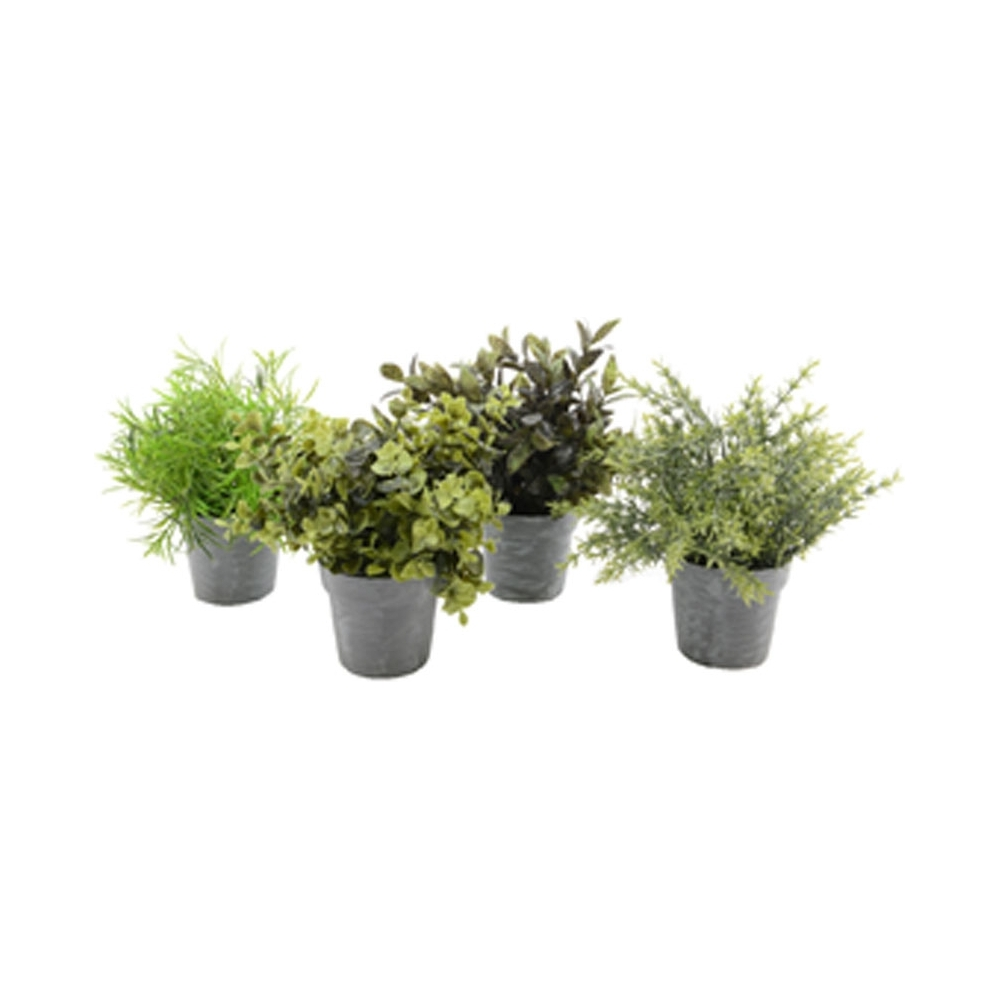 Piantine verdi con vaso