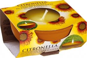 Vaso di Terracotta con Citronella | Vendita online all'ingrosso b2b