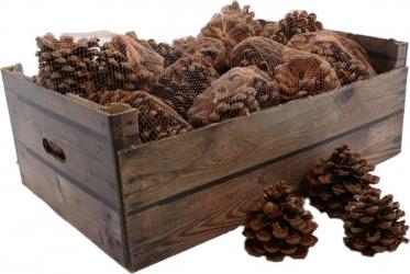Pigne pinus in confezione da 3 pezzi