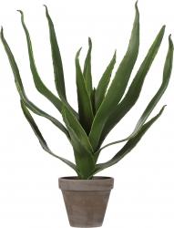 Aloe vera con vaso 45cm