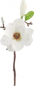 Pick magnolia bianca