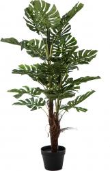 Pianta Philodendro da 120 cm
