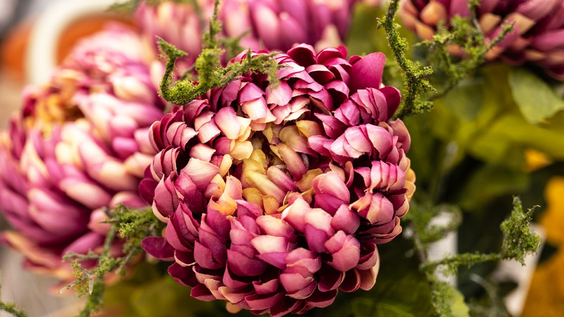 Crisantemo fucsia per spazi e vetrine autunno 2021. Tutte le incantevoli proposte di Incartare